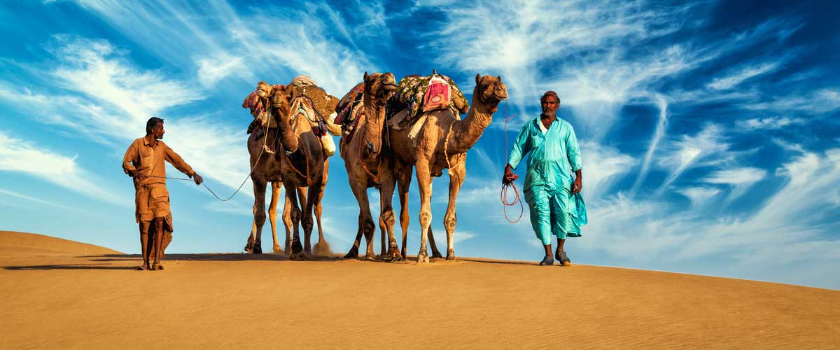 Rajasthan-Camel-Carava---Gallery